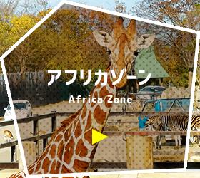 アフリカゾーン