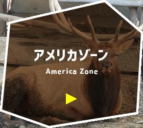 アメリカゾーン
