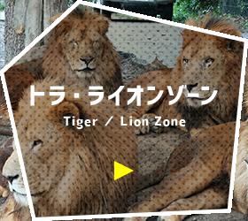 トラ・ライオンゾーン