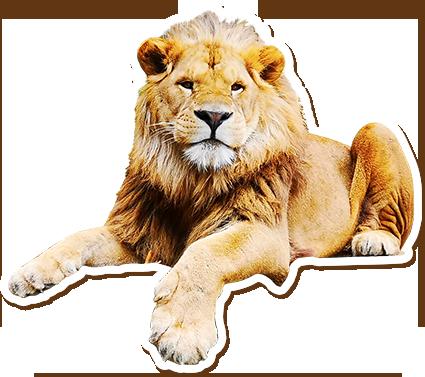ライオン画像